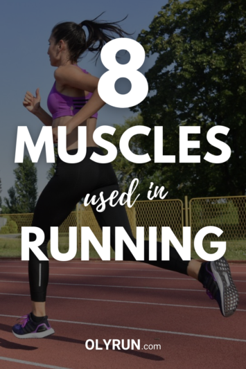 8 muscles used in running
